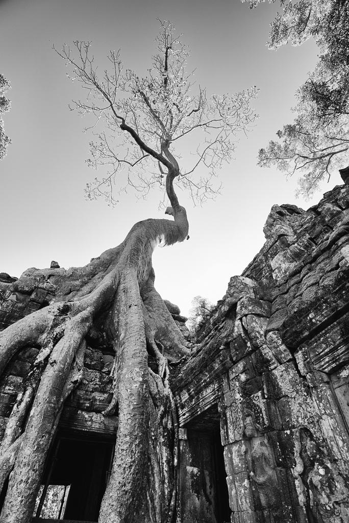 CC Cambodia 2017 789